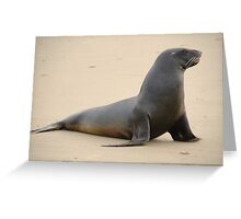 Pretty New Zealand Sea Lion Greeting Card