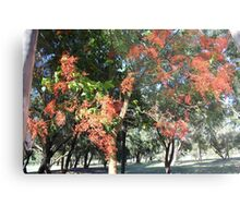 Flame Tree Metal Print