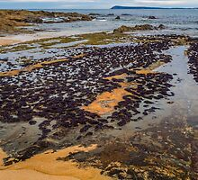 Mussel Beds by Bette Devine