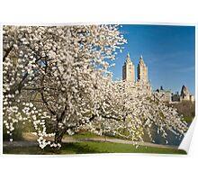 Central Park in Spring Poster