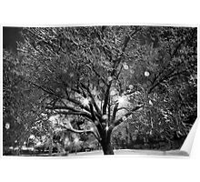 Shimmering Ice Tree Poster