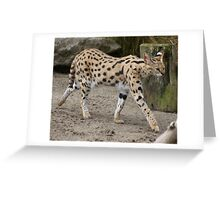 Furry Serval Greeting Card