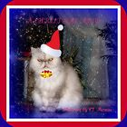 MEOWEE CHRISTMAS by Claire Moreau