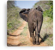 Elephant Phinda Vlei Canvas Print