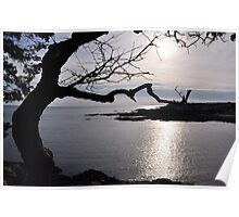 Funny Tree and Ocean View Poster