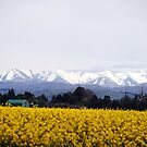 Southern Alps in  Spring by Marguerite Foxon