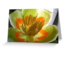 Tennessee Tulip Greeting Card