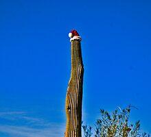Christmas Cactus by Bryan D. Spellman