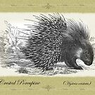 Crested Porcupine by Beesty