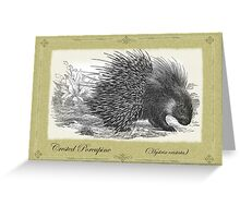 Crested Porcupine Greeting Card