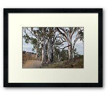 Natural Elegance Framed Print
