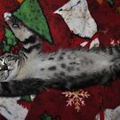 """"""" Resting Up For Christmas  """" by CanyonWind"""