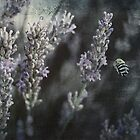 Lavender Bee by garts