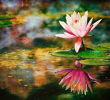 Tropical Water Lily  by Chuck Underwood