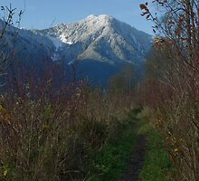 Pitt Lake Dykes Mountain View by Michael Garson