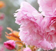Blush by lorelle