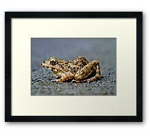 Litoria Tree Frog Framed Print