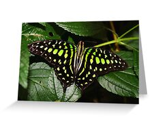 Open Wings Tailed Jay - Graphium agamemnon Greeting Card