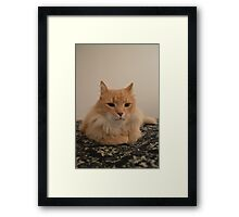 My Maine Coon Framed Print