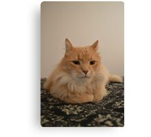My Maine Coon Canvas Print
