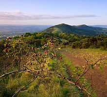 Malvern Hills : Autumn Berries by Angie Latham