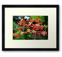 Blooming Red Framed Print
