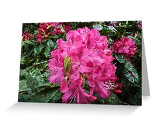 Rhododendron flower bloom with texture. Greeting Card