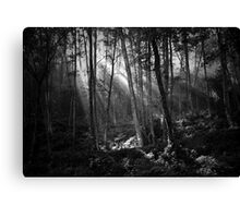 streaming light Canvas Print