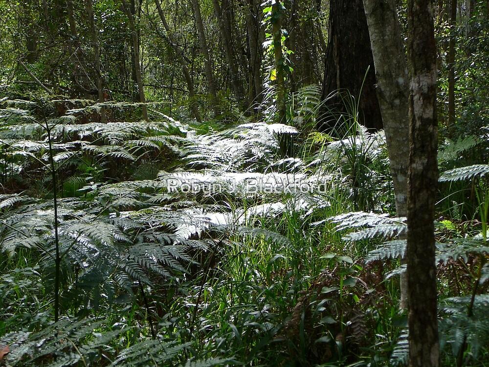 Sunkissed Ferns in the Bush by aussiebushstick