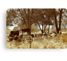 Got Cows? Canvas Print