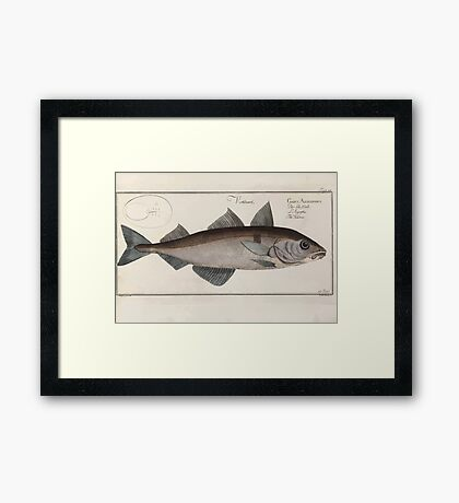 General natural history of fish  Germany Allgemeine naturgeschichte der fische Marcus Elieser Bloch Plates 1795 0361 Framed Print