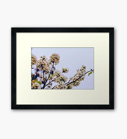Le fleur Framed Print