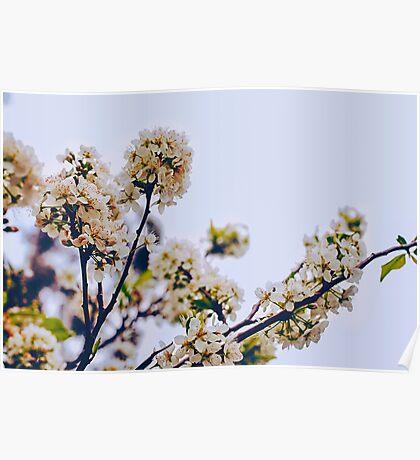 Le fleur Poster