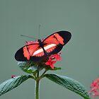 Red Doris Butterfly by RoyceRocks
