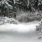 Approaching  Summerhouse Hill Wood by John Gaffen