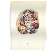 The Tale of Squirrel Nutkin Beatrix Potter 1903 0049 Old Brown Owl Looking at the Egg Poster