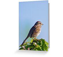 Dear Sparrow... Greeting Card