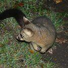 Possum in the dark by flipteez