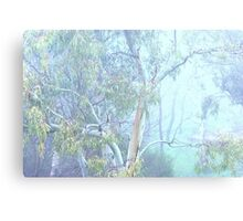 Beauty in the morning mist Canvas Print