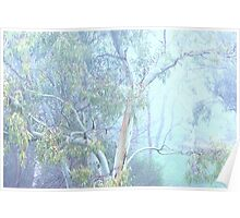 Beauty in the morning mist Poster