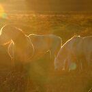 Sun Horses by Anthony Thomas