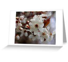 odd 8 petal cherry blossom Greeting Card