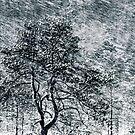 3.12.2010: Art of Nature by Petri Volanen