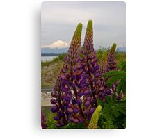 lupin and mt baker Canvas Print
