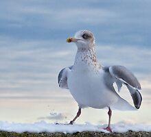 Snow Bird by Susie Peek