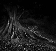Moreton Bay Fig by blueeyesjus