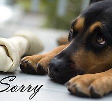 I'm sorry - dog with bone and sad eyes by laurenmacphotog