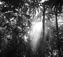 Rainforest by TravisLaurence