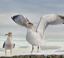 Snow Bird ~ 2 by Susie Peek