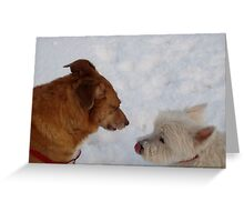 Cats Can`t Do This Though!!! Greeting Card